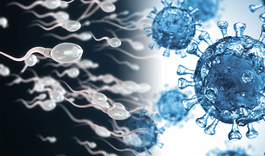 Affects of COVID-19 on male fertility